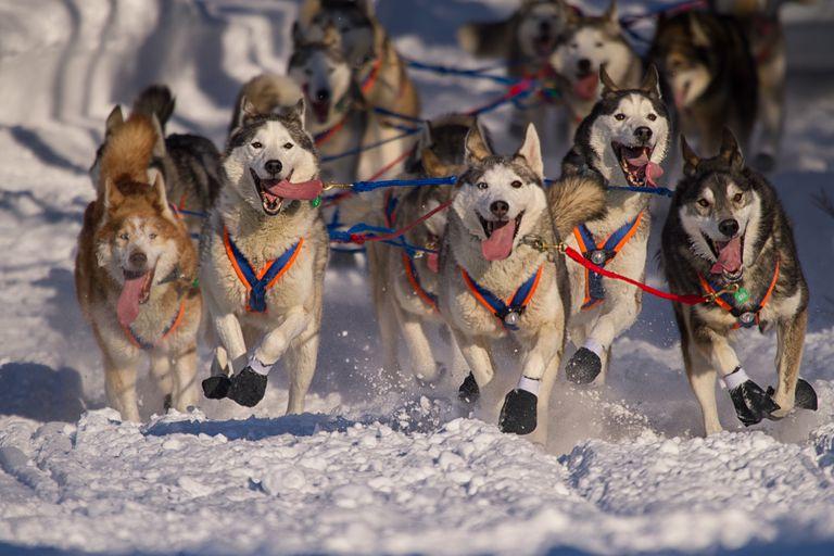 Iditarod Printables