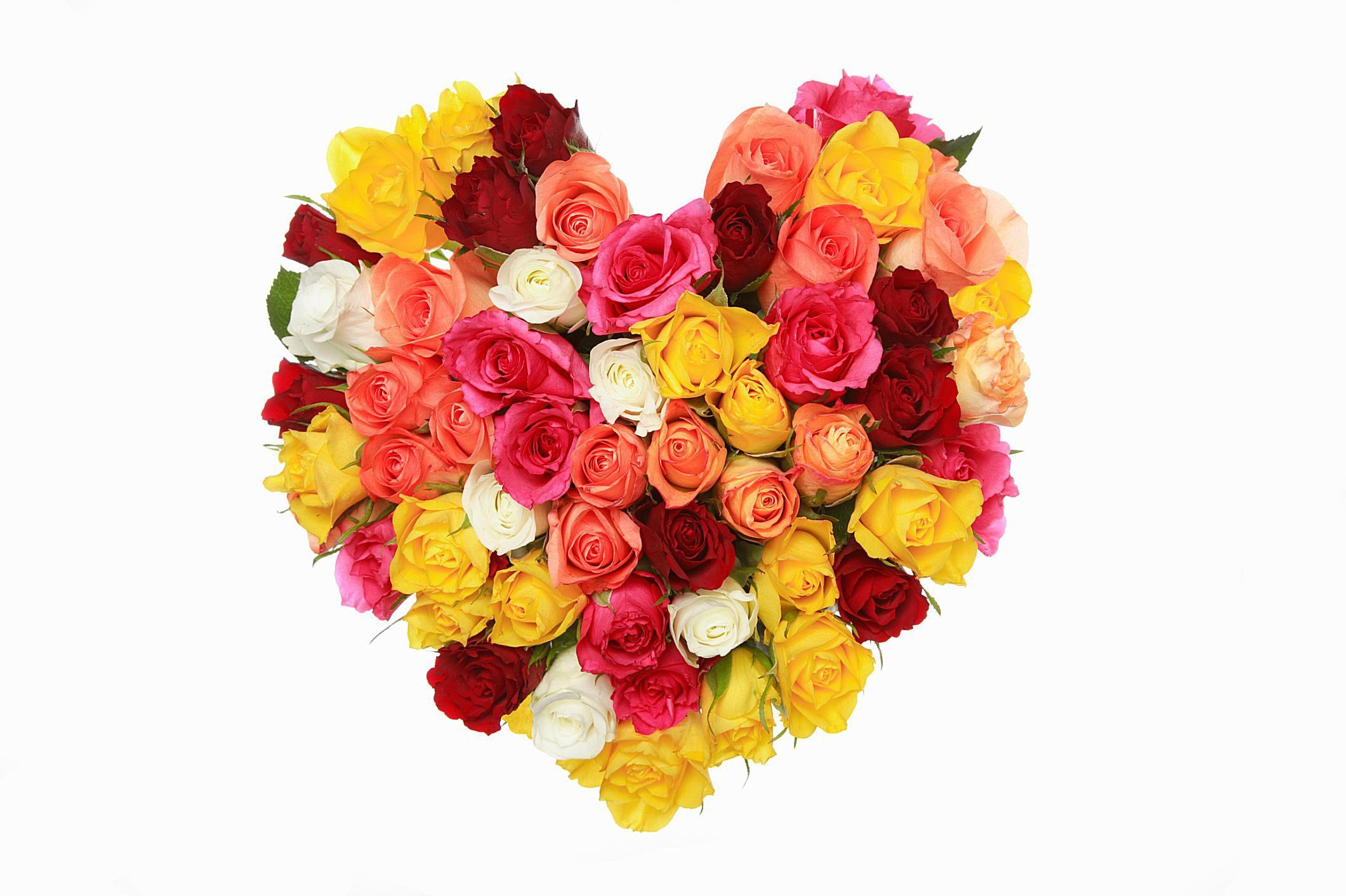 Sacred roses the spiritual symbolism of the rose buycottarizona