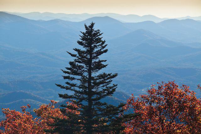 Georgia Fall Foliage: Brasstown Bald