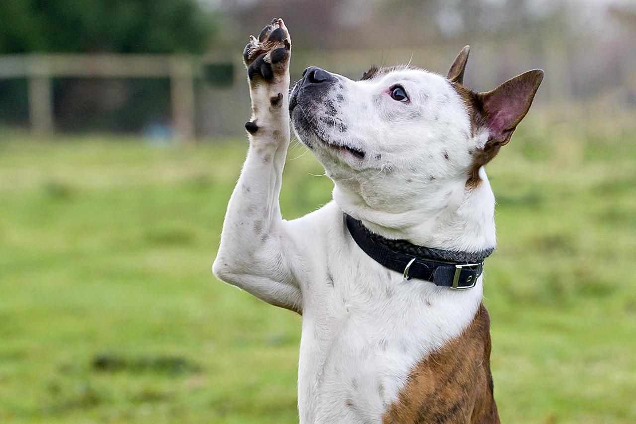 How To Train Your Dog To Wave