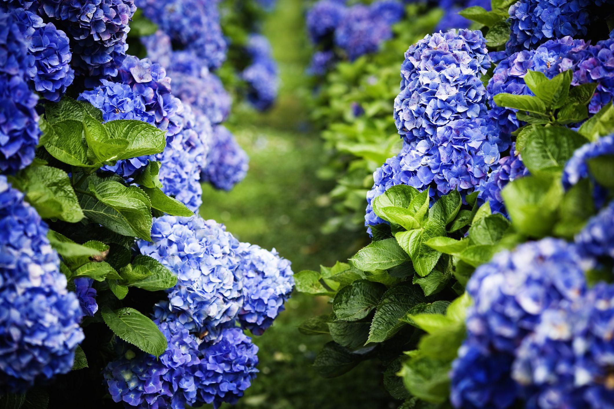 What Does Alkaline Soil Mean What Plants Grow In It