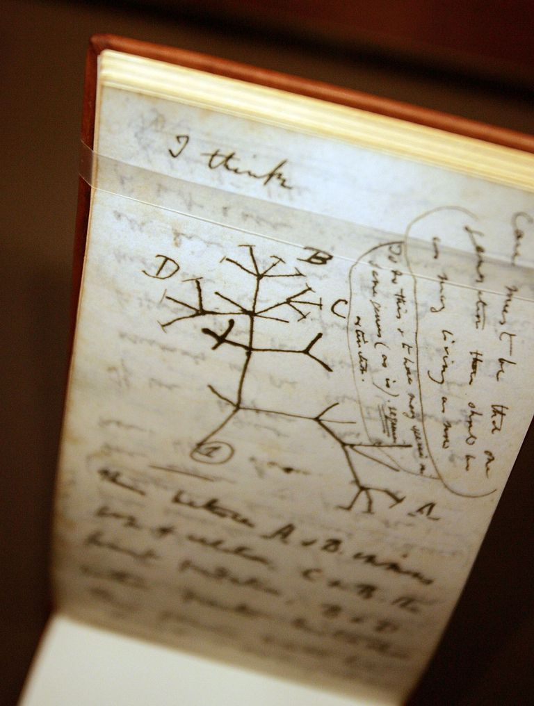 Darwin Exhibit Opens In New York City