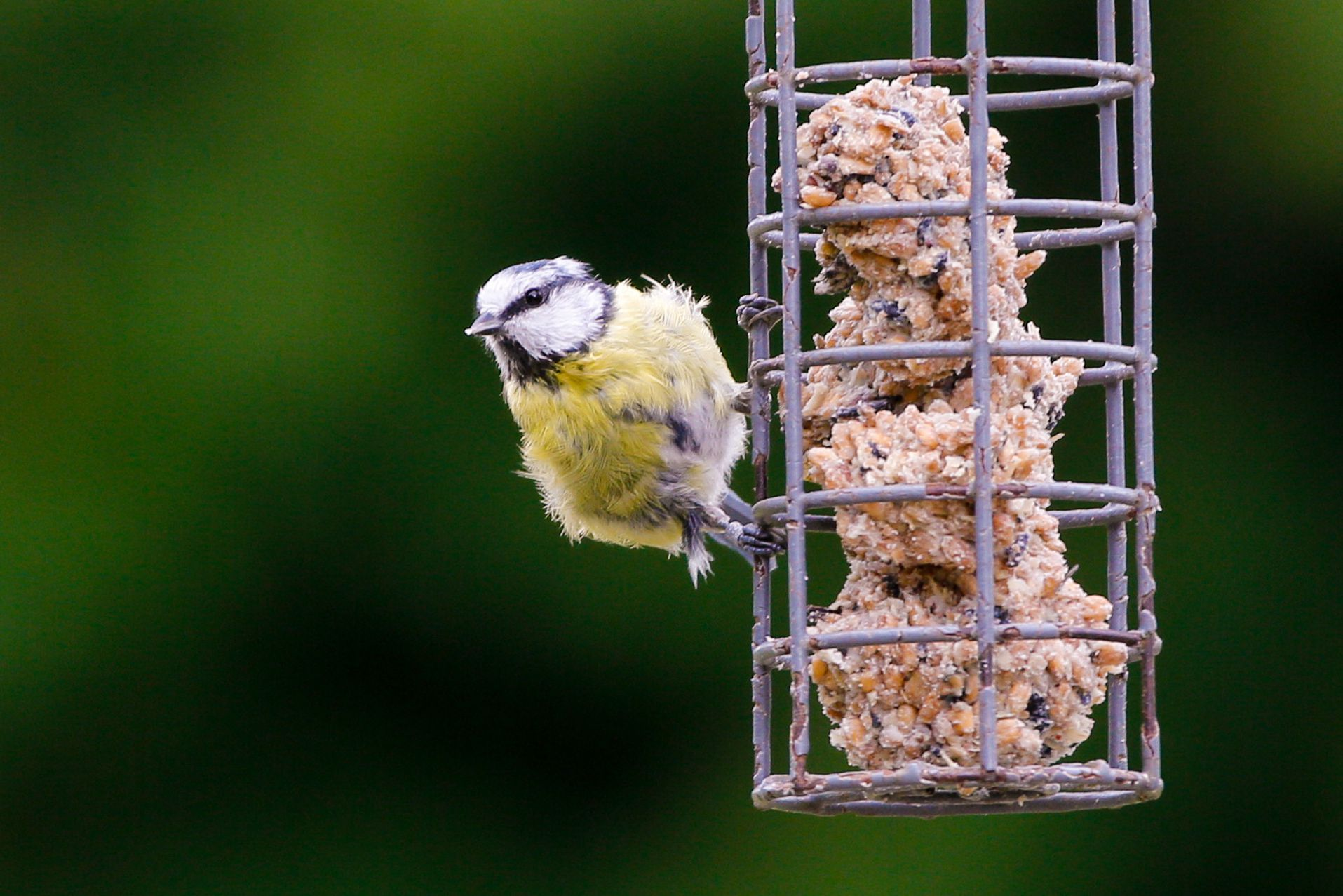 pet yellow hanging dp feeder uk co garden nut bird amazon supplies home