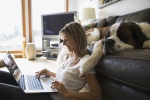 Saint Bernard dog sleeping sofa woman with laptop