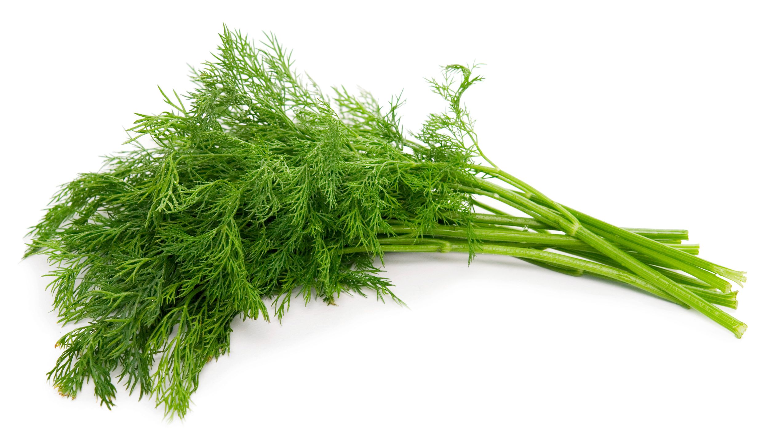 What Kind Of Herb Is Dill And How Is It Used