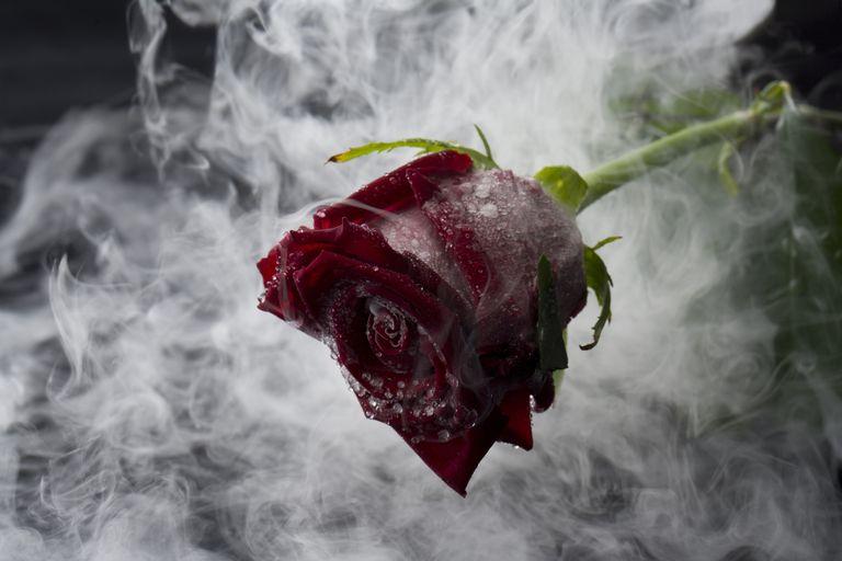 Red Rose in Liquid Nitrogen