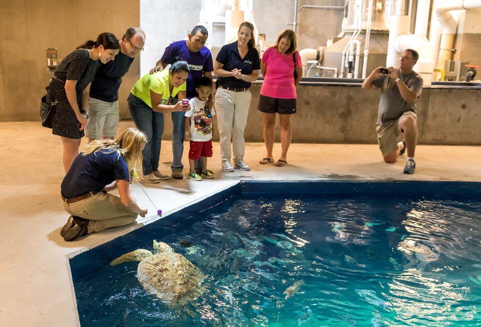 Behind the Scenes Tour at Odysea Aquarium Scottsdale