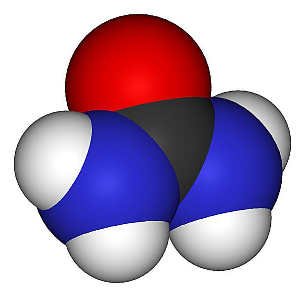 Urea is an organic molecule that is also know as diaminomethanal or carbamide.