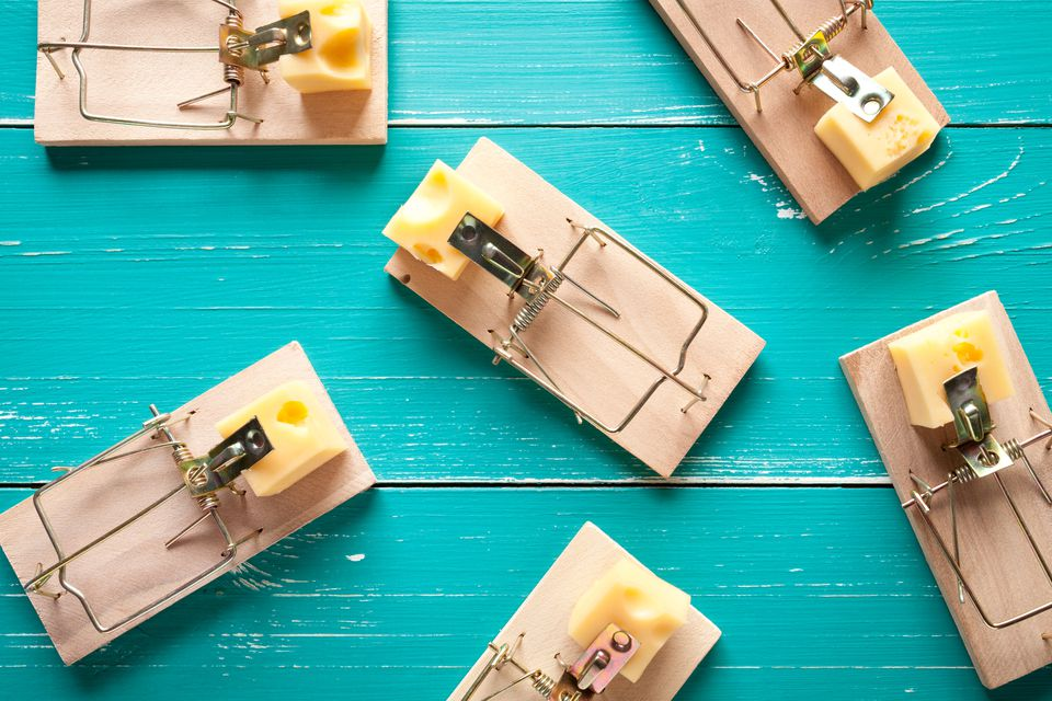 Mouse traps with cheese