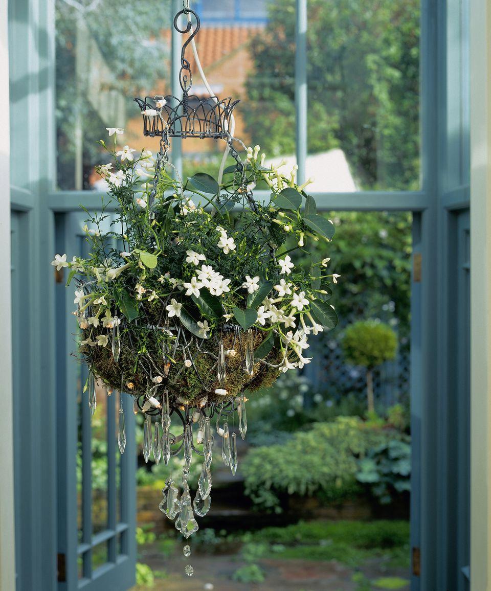 Best Houseplants For Sunny Windows