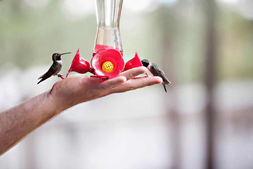 Hand feeding hummingbird