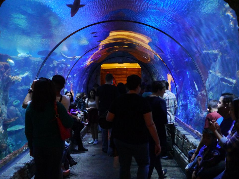 Shark Reef Aquarium at Mandalay Bay