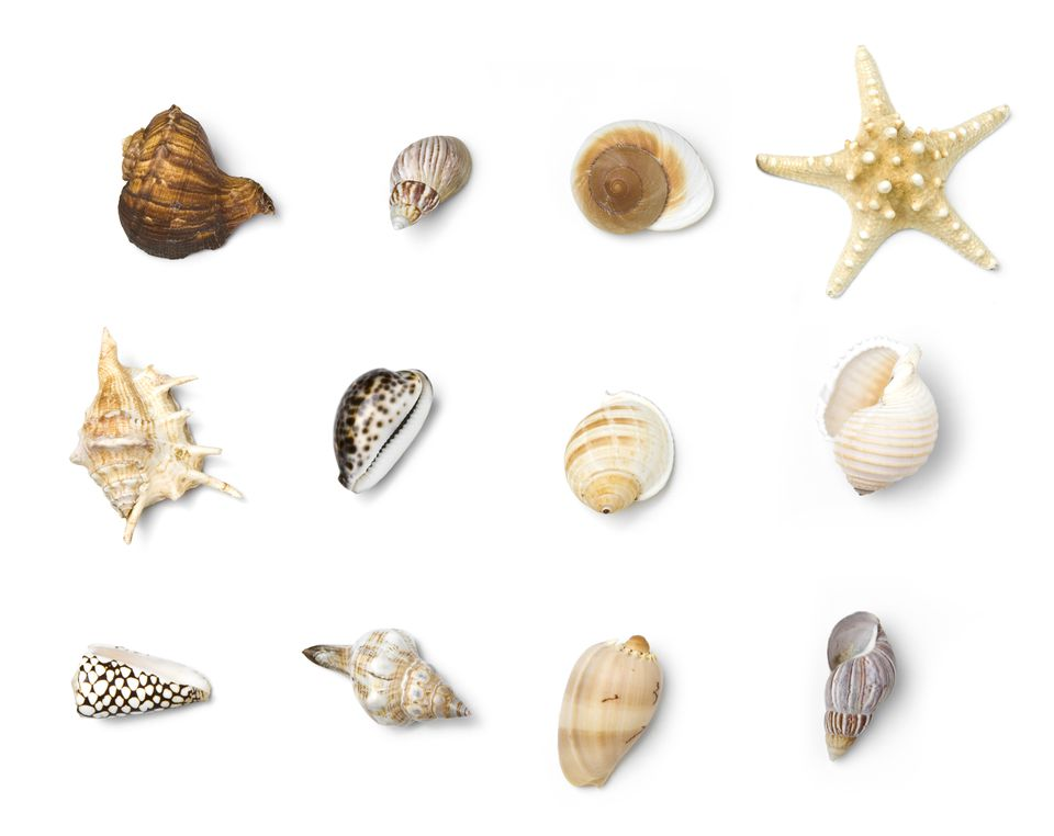 Beach Objects Series
