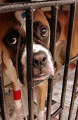 Sick dog on IV Fluids in veterinary hospital © Miguel Vera on Flickr