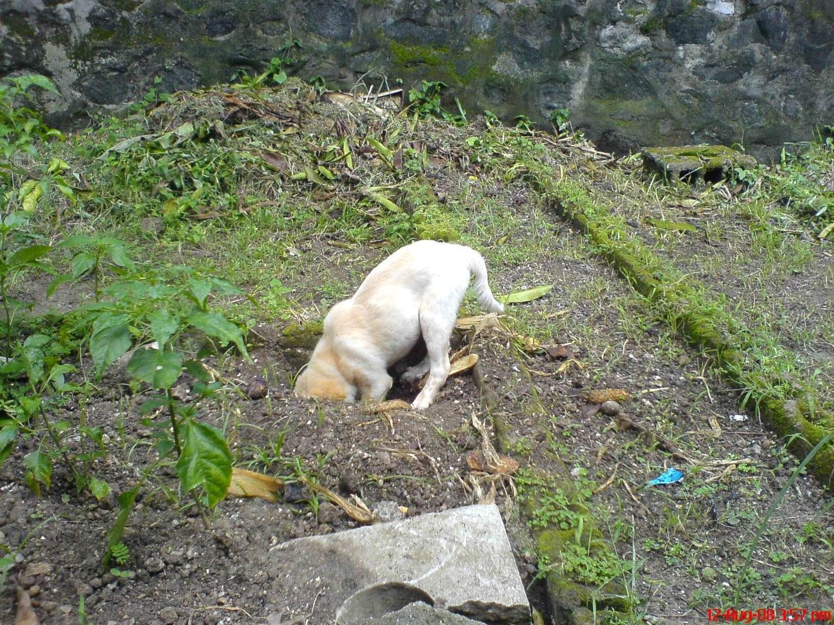 how to prevent and stop dogs from digging