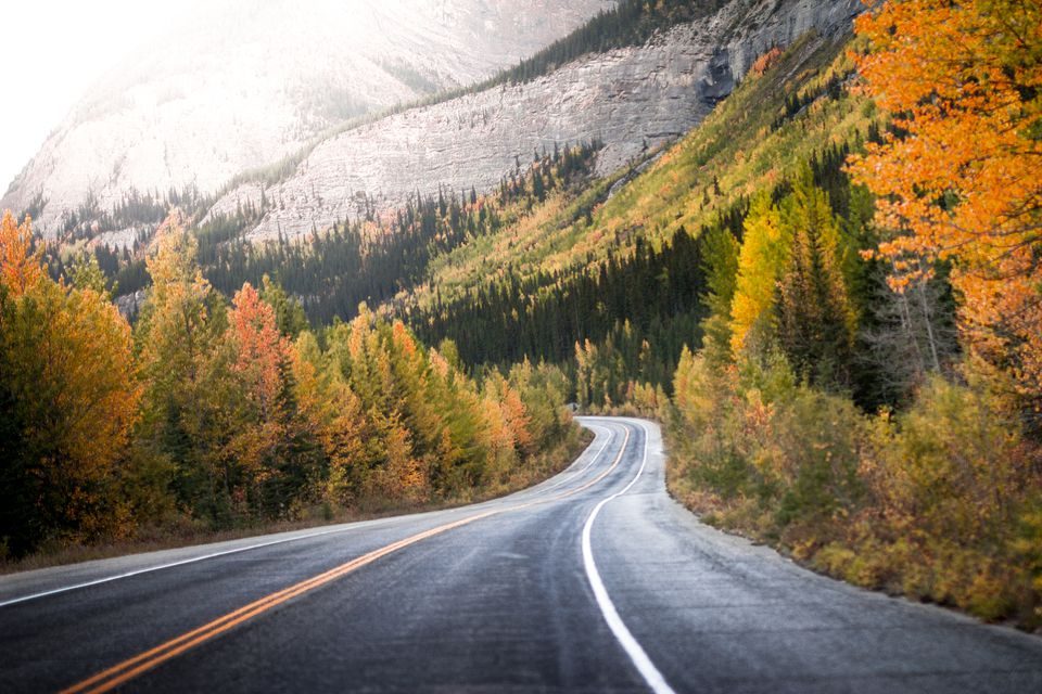 treelined road through Canadian rockies, Alberta, Canada