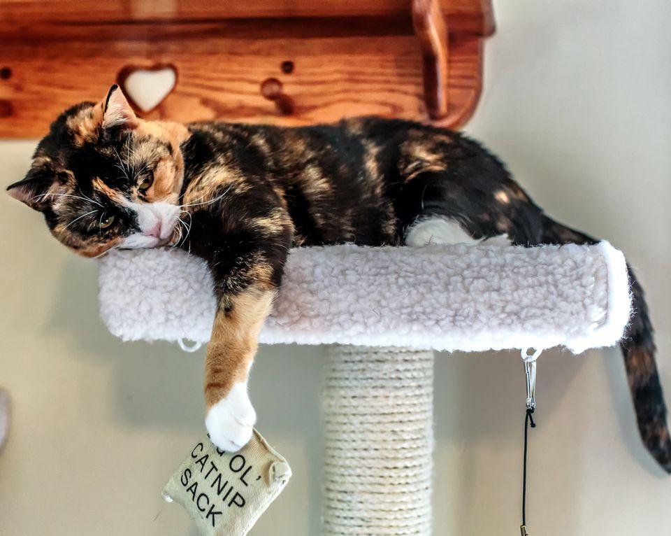 Cat and catnip