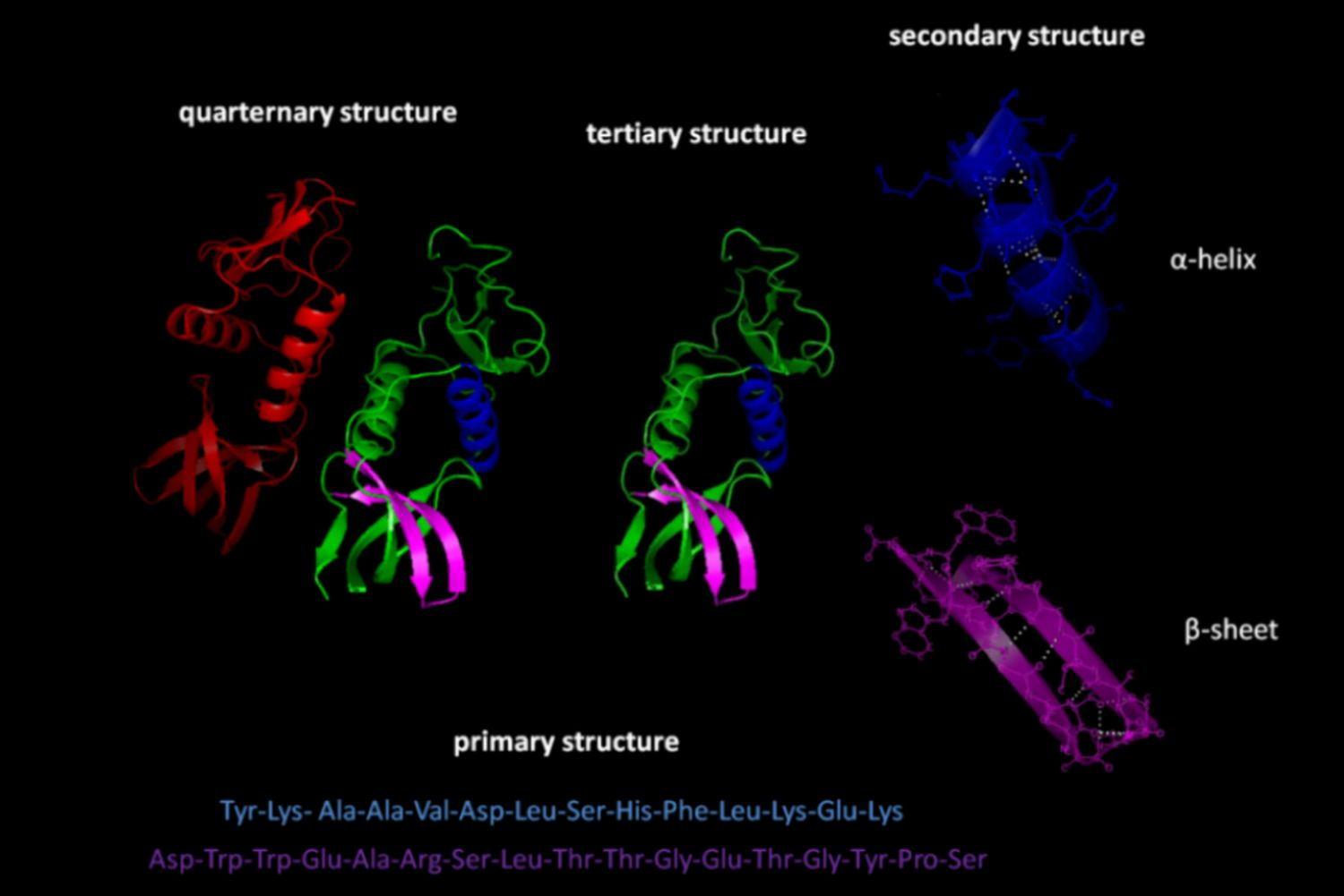 Learn About the 4 Types of Protein Structure