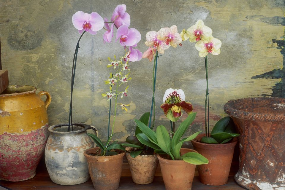 variety of orchids in terracotta pots 2 x portrait, 2 x landscape