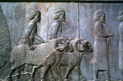 impact of the silk road on ancient civilizations The strangest things archaeologists have found on the  one of the greatest civilizations of the ancient world wasn't  and dubbed the silk road by.
