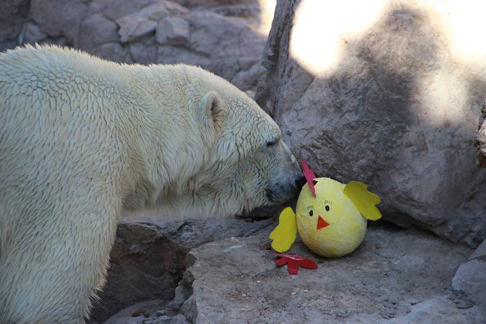 Easter enrichment at the ABQ BioPark Zoo