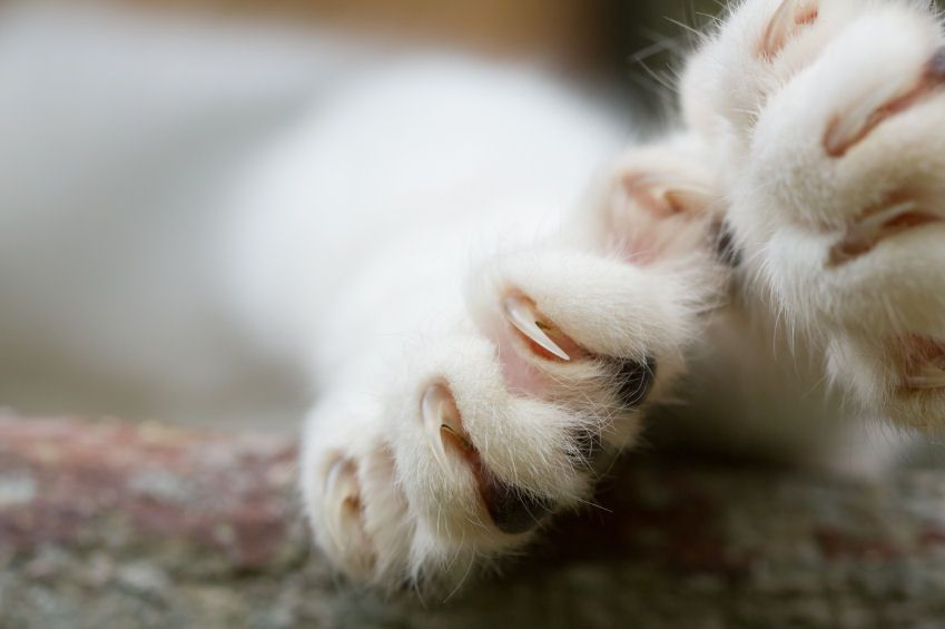 Close-up Photo of Cat's Claws