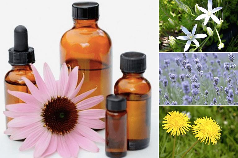 Flower Essence Collage