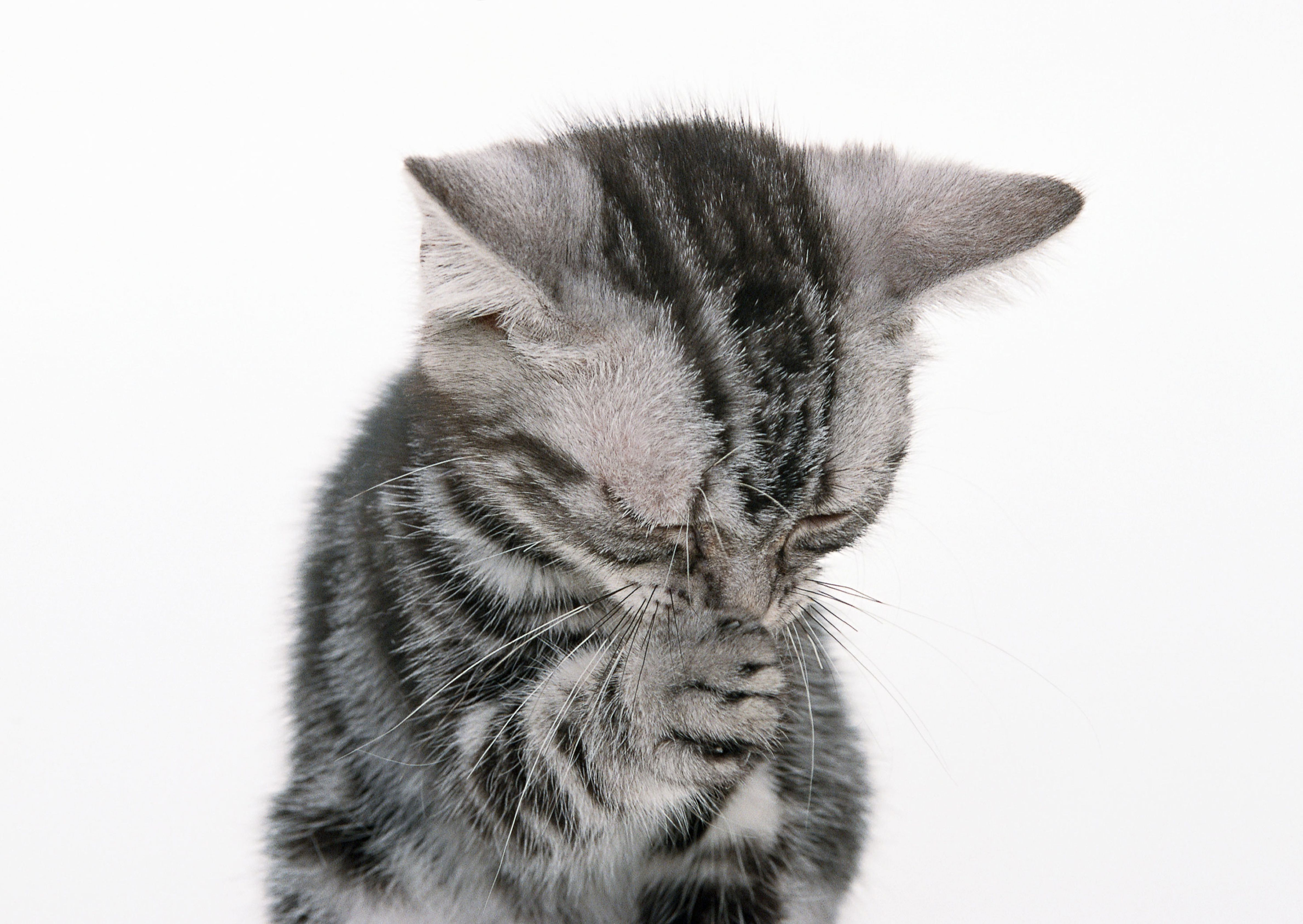 Why Kittens Sneeze and What to Do About It