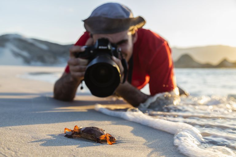 Caucasian photographer taking picture of crab on beach
