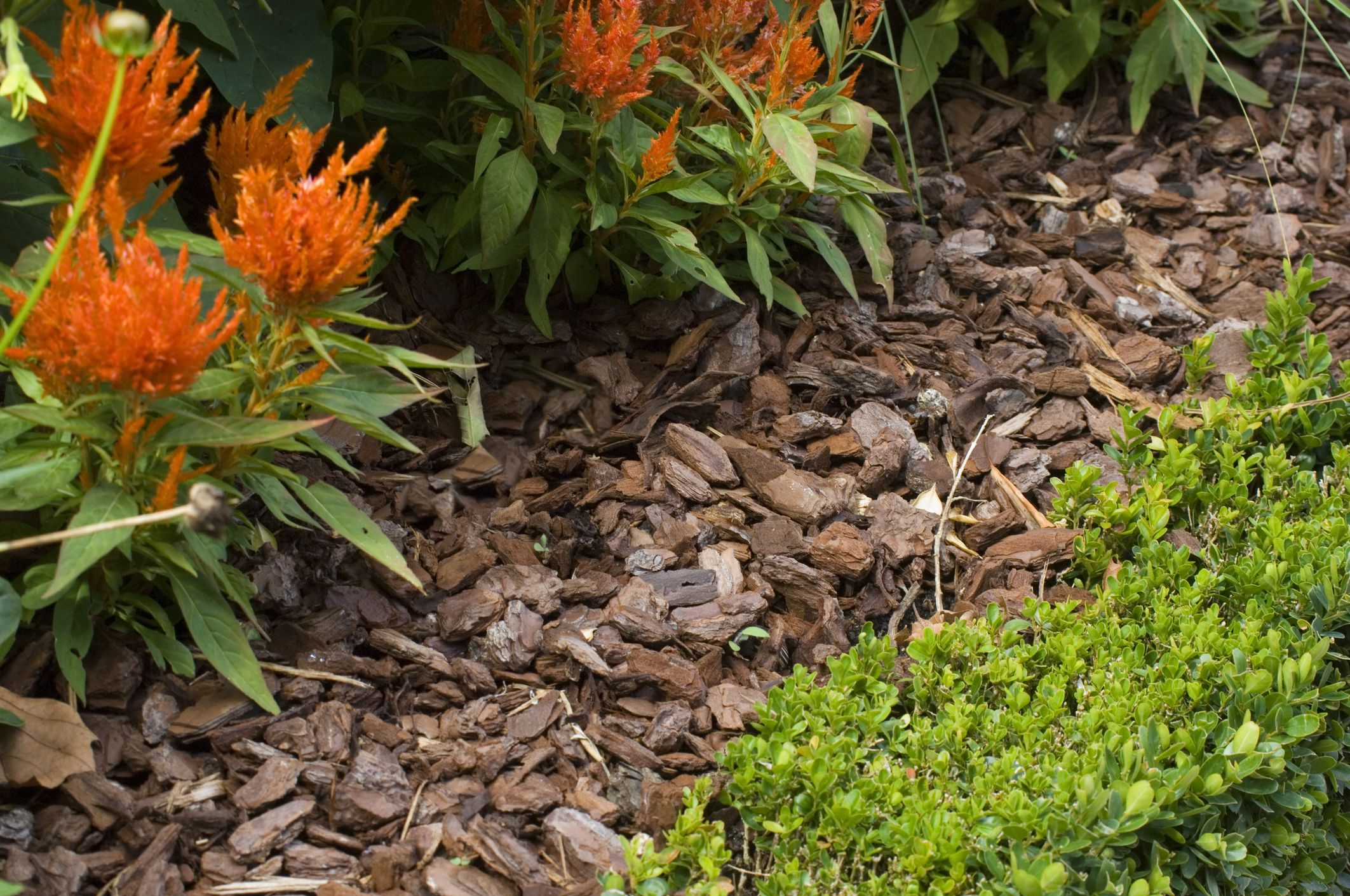 Mulch what it means how it 39 s used in landscaping for No maintenance outdoor plants