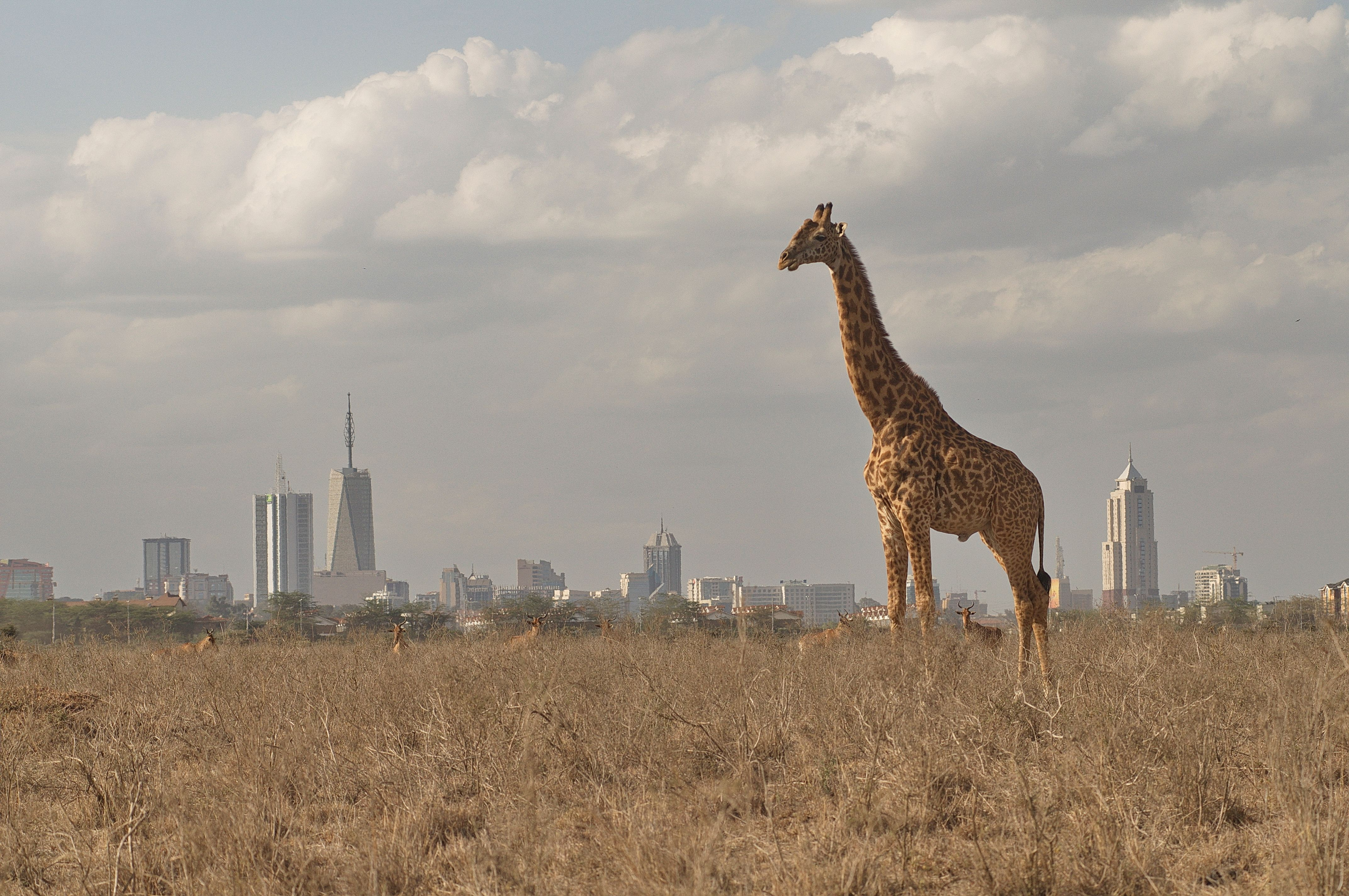 Capital City Auto >> Eight of the Top Attractions in Nairobi, Kenya