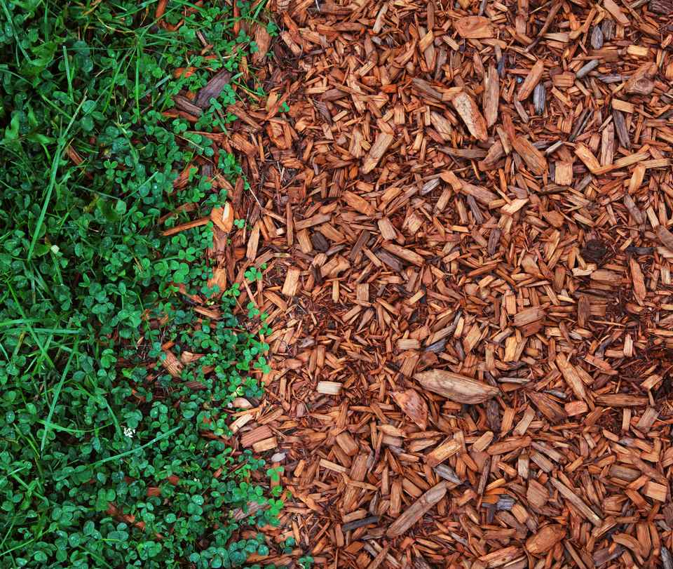 What Is Mulch and Which Mulch Should You Use Where?
