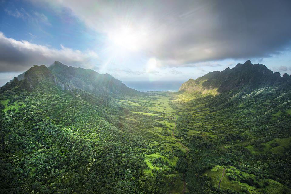 Aerial of Tropical rainforest, Hawaii