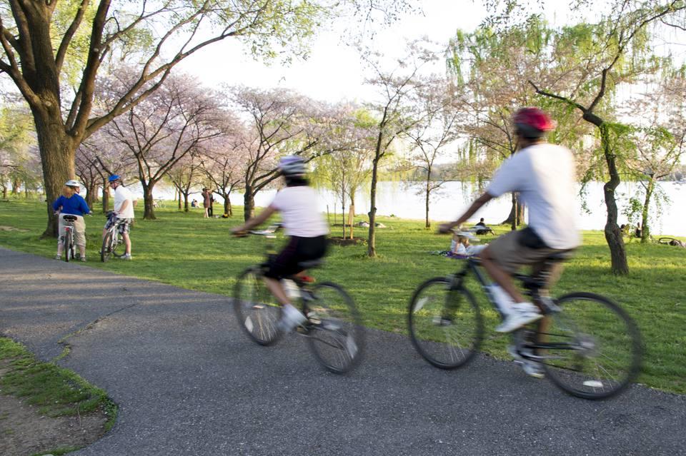 People riding bikes in West Potomac Park, Washington DC