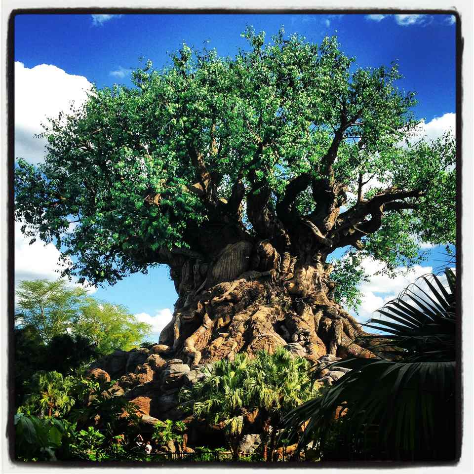 Disney's Animal Kingdom: Tree of Life