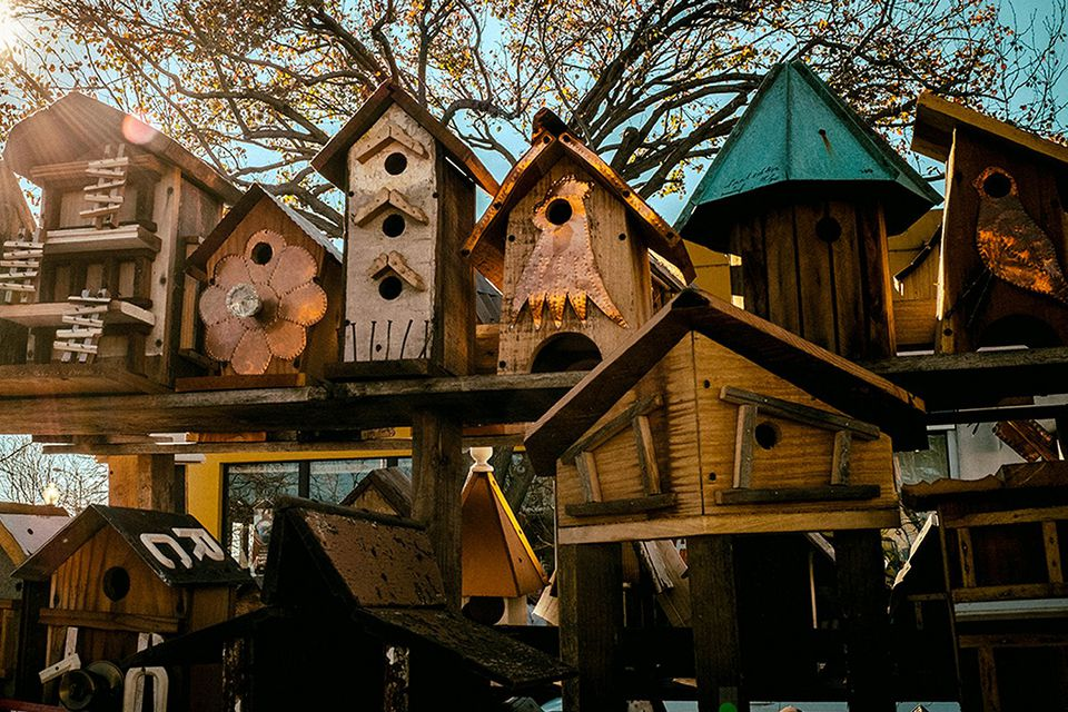Top 10 birdhouse problems and solutions for Types of birdhouses for birds