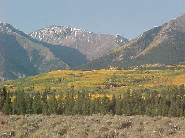 Fall Aspen Trees in Colorado