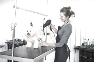 How to start a mobile dog grooming salon solutioingenieria Choice Image