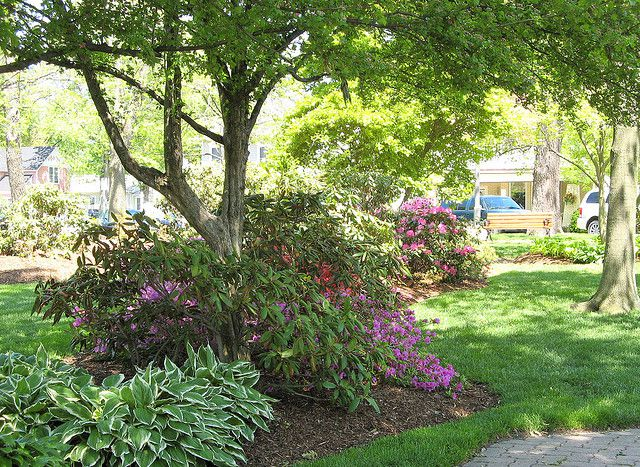 Top 10 flowers for shading your garden for Garden design under gum trees