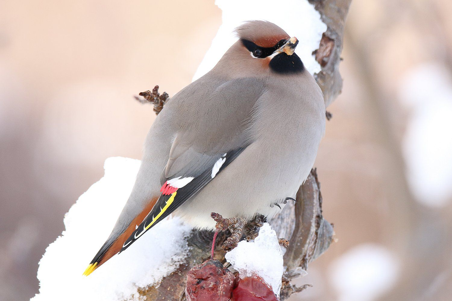Pictures Of Winter Birds Photo Gallery