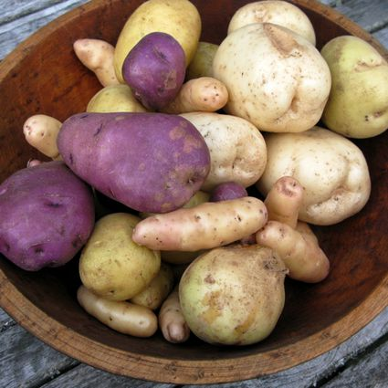 potato planting tips