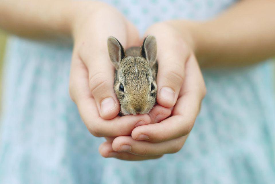 Bunny With a Girl