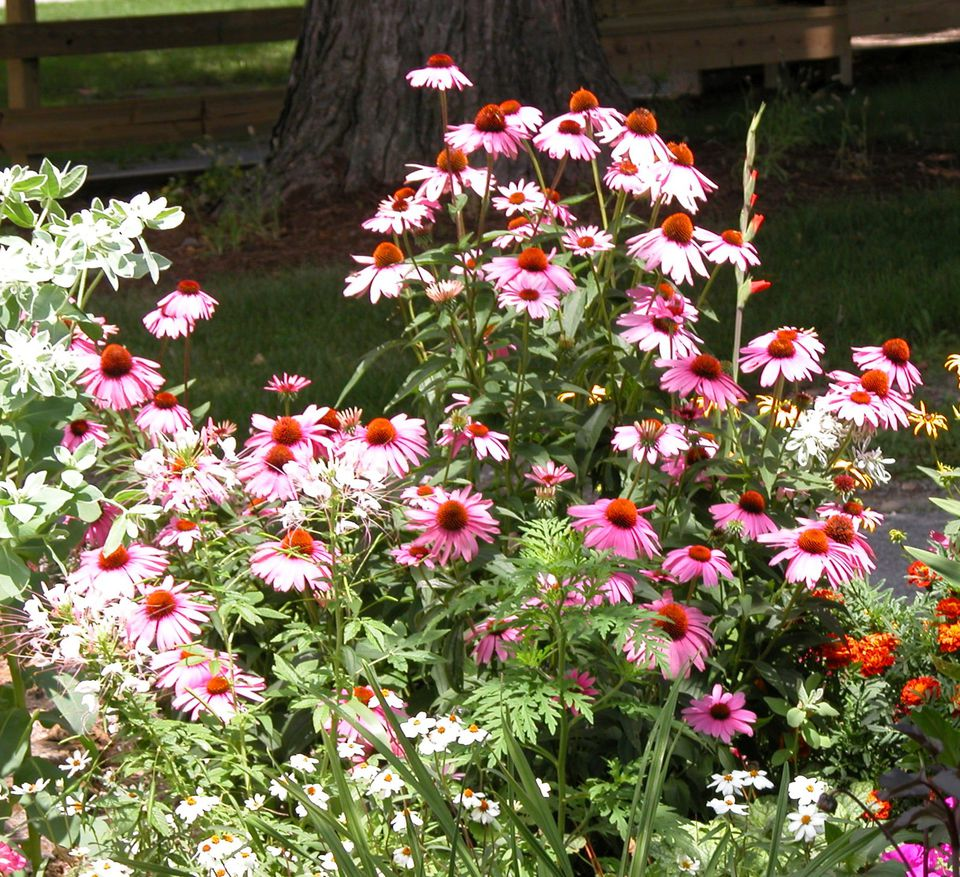 Low maintenance perennial flowers for No maintenance flowers