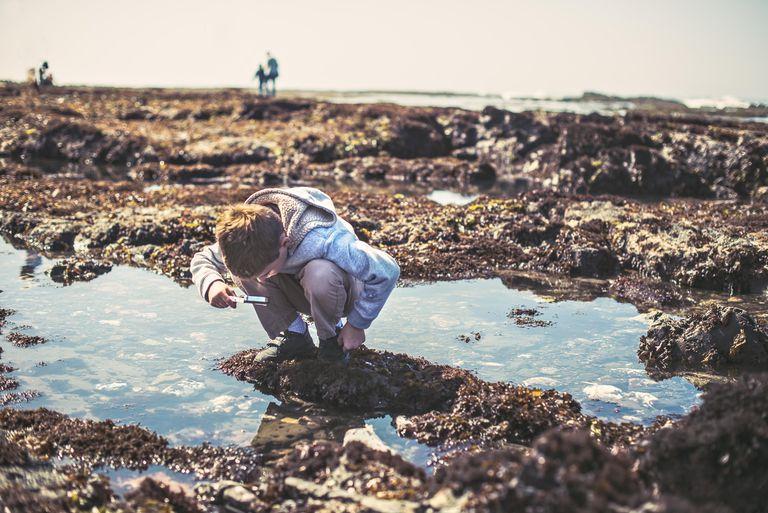 Boy Looks At Tide Pools, Half Moon Bay
