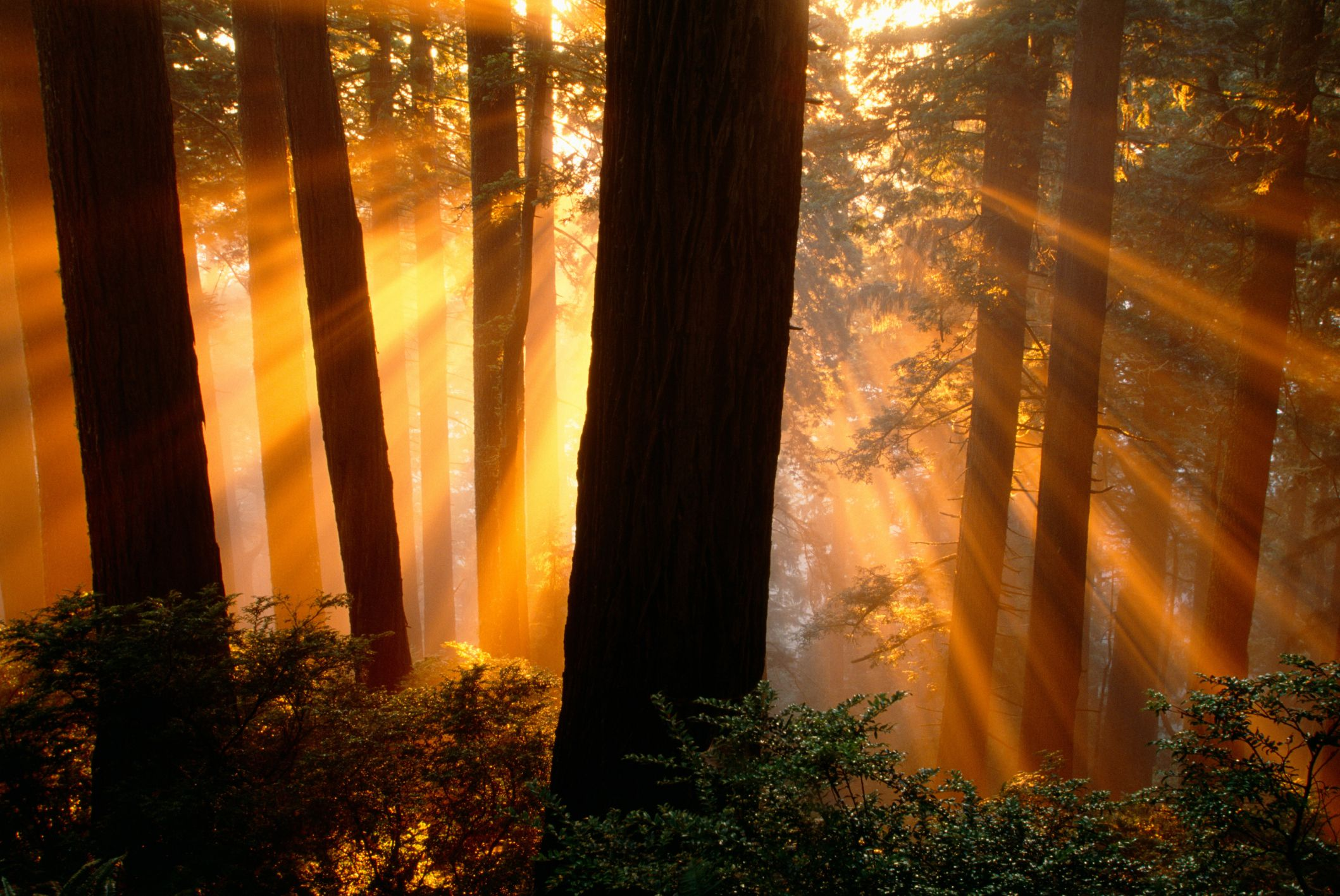 Rv Destination Guide Redwood National Park