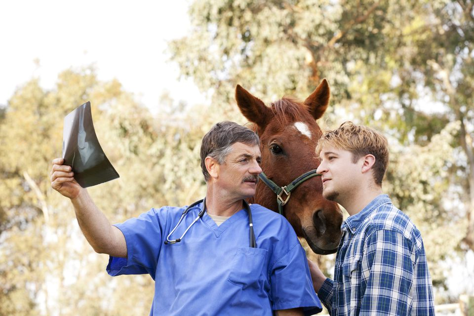 Doctor reviewing horse x-ray with owner