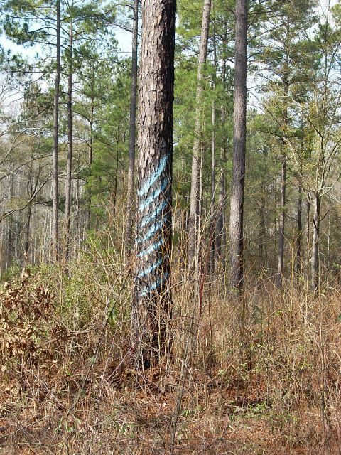 Pole trees with class mark