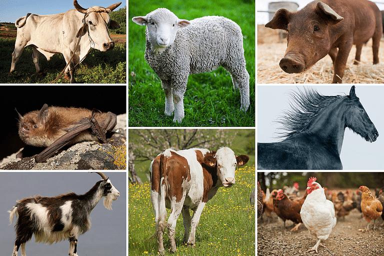 Photos of Farm Animals