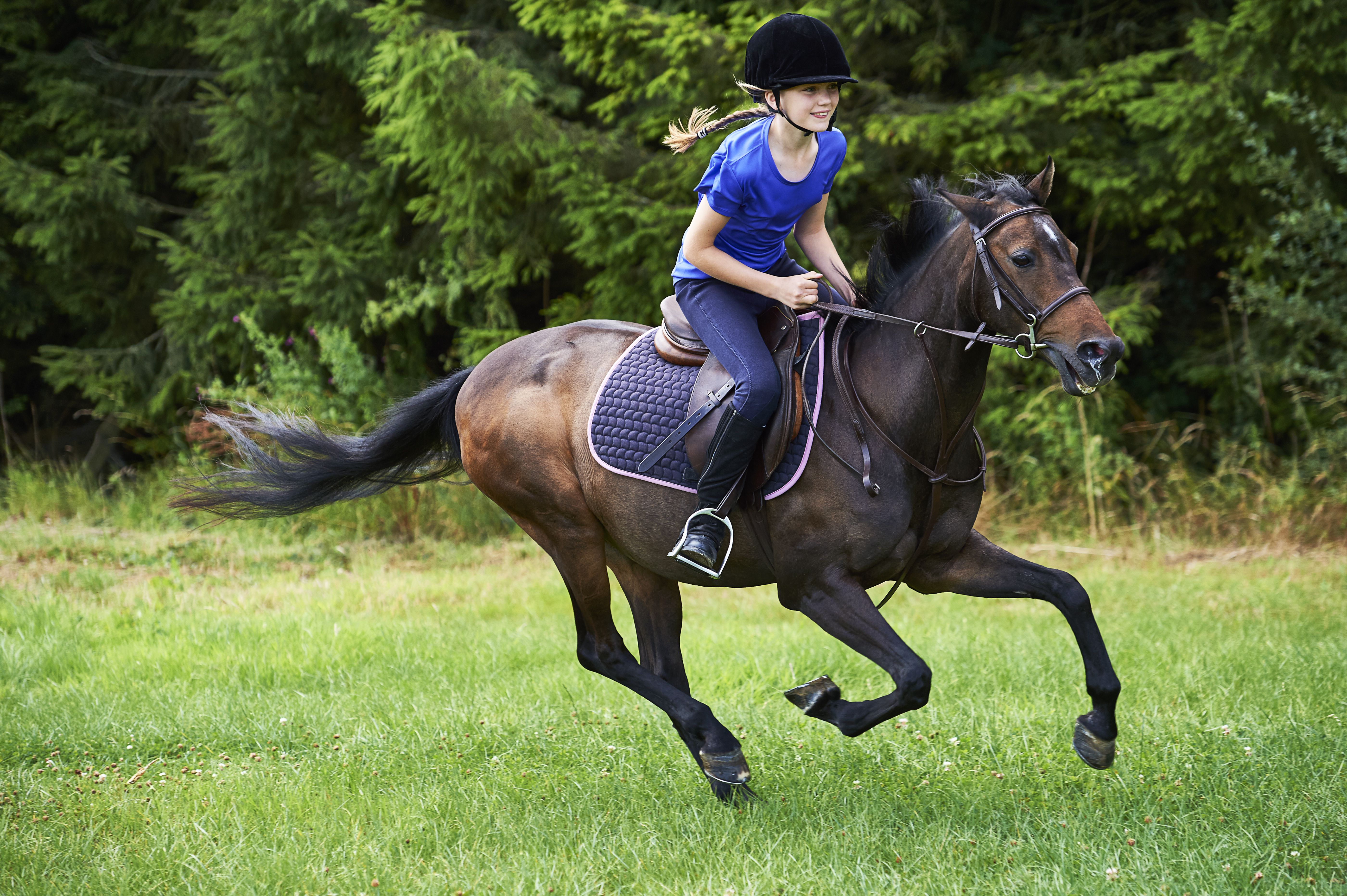 Step by step guide to learning to ride a horse baditri Image collections