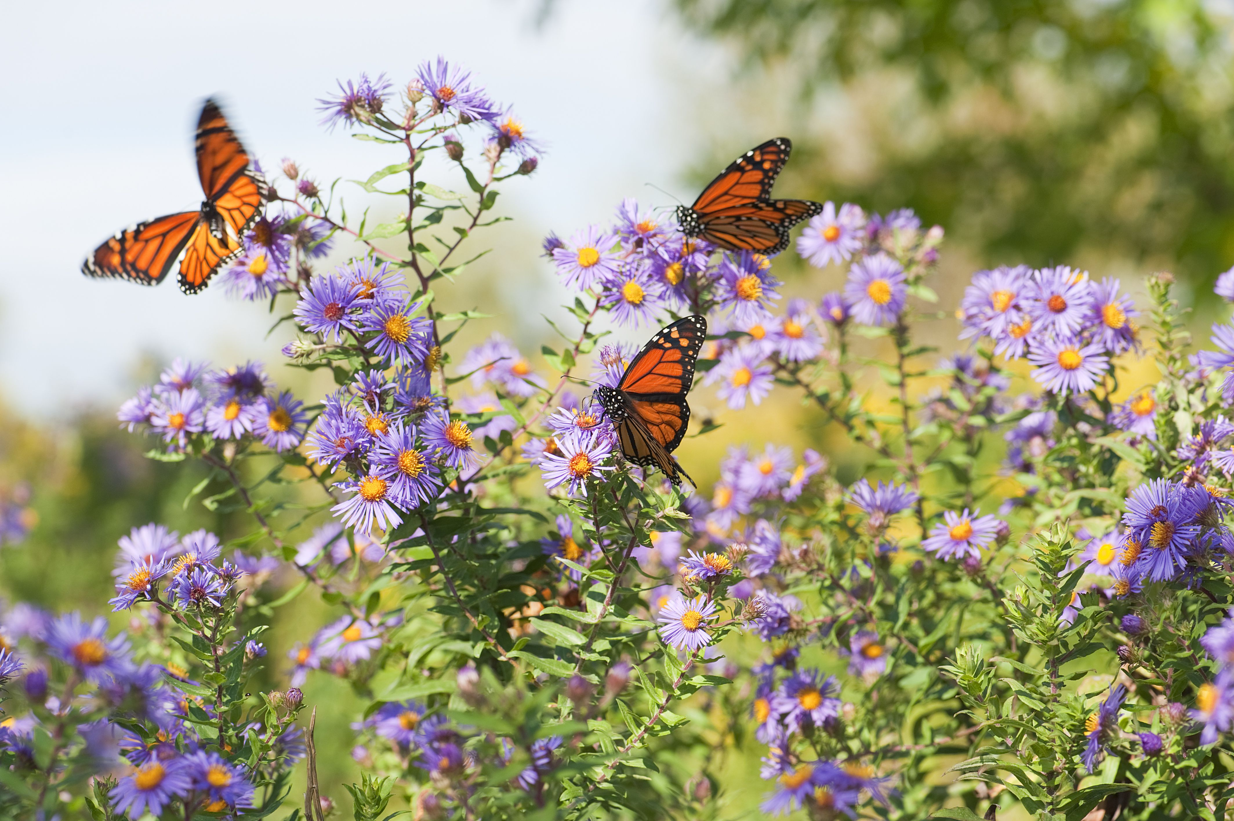 10 Easy Wildflowers For Your Garden